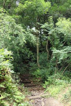 Niiharu_forest_10