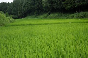 Niiharu_forest_17