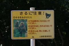 Nanasawa_08