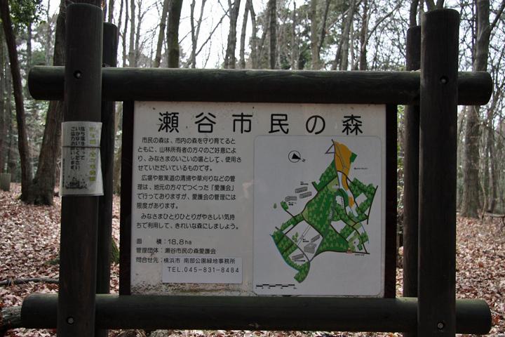 Seya_forest_01