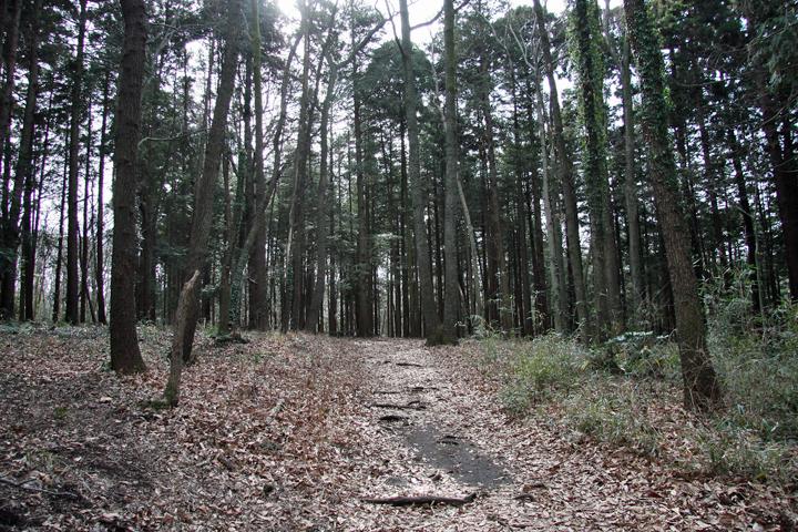 Seya_forest_06